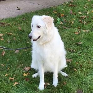 PHOTO GALLERY: 2020 Parish Pet Blessing – Oct. 3, 2020